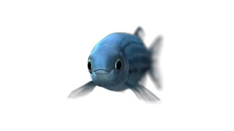 fish800.jpg