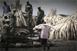 WildAid and Grey to livestream world record ivory bonfire on Periscope and WeChat