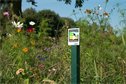 Syngenta urges greenkeepers to sign up to Operation Pollinator scheme