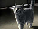 Sheba goes to Provence in new catfood spot from AMV