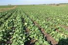 UPM trials new non-edible biofuel feedstock