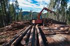 Commission defends EU forest strategy before MEPs