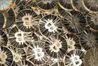 Bitcoin services firm Bitnet hires Berkeley PR