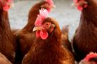 Bid for 200,000-bird chicken farm in Shropshire countryside refused by planning inspector