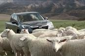 Sheep sing Queen's 'Somebody to Love' in Honda's Ridgeline Super Bowl spot