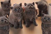 Winning the fight against own-brand - or, how kittens can make killer commercial sense