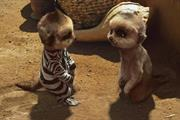 Meerkats return to Africa for Comparethemarket campaign