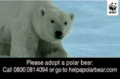WWF revisits DRTV with adopt a polar bear campaign