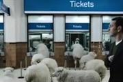 Sheep used to shepherd passengers to thetrainline.com