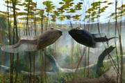 "Freeview ""tadpoles"" by Leo Burnett"