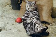Cravendale 'Cats with thumbs'