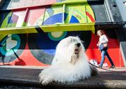 Dulux illustrates the 'amazing power' of colour in giant mural campaign