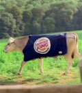 Burger King: cow attracting complaints
