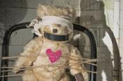 Mysinglefriend.com: The Bear Gets It campaign