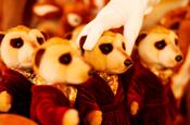 Aleksander: Meerkat toy on sale in Harrods