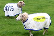 Sheepish campaign by thetrainline.com