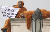 Greenpeace: ape protest