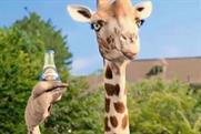 Orangina: Fred & Farid Paris has created offbeat ads featuring anthropomorphised animals