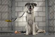Pedigree: vitrual dog walk promotes adoption drive