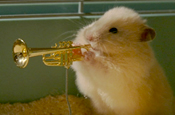 Drench: launches hamster jazz band
