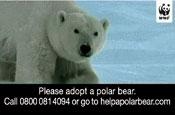 WWF: adopt a polar bear campaign