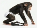 Puma: attacked over use of chimp in ad