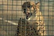 Hyundai 'cheetah' by Innocean
