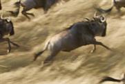 British Airways 'serengeti' by Bartle Bogle Hegarty