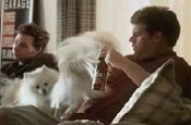 Budweiser 'beware of the dogs' by DDB Chicago