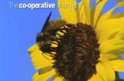 The Co-operative Pharmacy 'thistle' by McCann Erickson