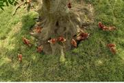 "McDonald's ""trust the tree"" by Leo Burnett"