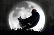 Black Grouse 'stormy night' by AMV BBDO