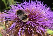 Bayer, CPA and Syngenta to respond to neonicotinoids research