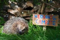 RSPB makes TV debut to create 1m homes for wildlife