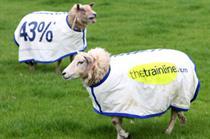 Thetrainline.com advertises on sheep outside Dorking Station