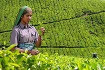 Typhoo prepares to offer Fairtrade teas