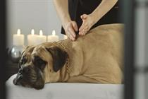 Pampered guard dog sells Panasonic's Internet of Things products