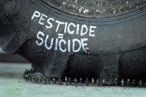 Greenpeace says save the bees or humans will die