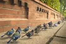 Hungry birds star in Peckish TV debut