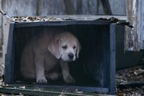 Campaign Viral Chart: Super Bowl success for Budweiser's 'lost dog'