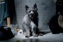 The7stars lands Dogs Trust rehoming initiative