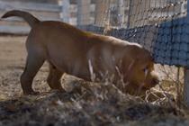Watch Budweiser's cute 'puppy love' ad, winner of the social Super Bowl