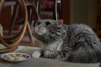 Sainsbury's praises 'huge success' of Christmas campaign featuring Mog the cat