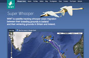 Wildlife trust hopes for web hit with swan-tracking Google Earth app