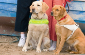 TDA creates emotive mailout for guide dogs charity
