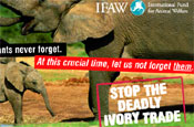 IFAW launches mail campaign to ban ivory trade