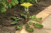 Weed killer brand teams up with Aardman