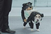 "Gocompare.com ""double dog"" by Dare"
