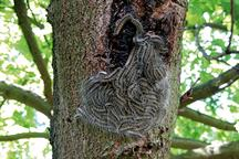 Pest & Disease Factsheet - Caterpillars