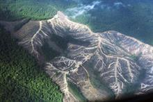 Cleared pulpwood concession in Sumatra (Greenpeace / Ardiles Rante)